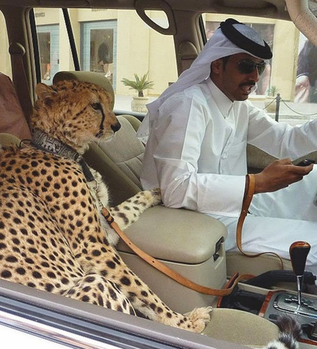 The ridiculous lives of rich people in dubai damn cool pictures