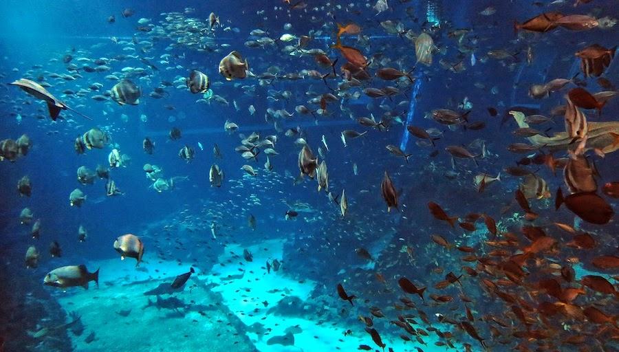 Sea World Indonesia