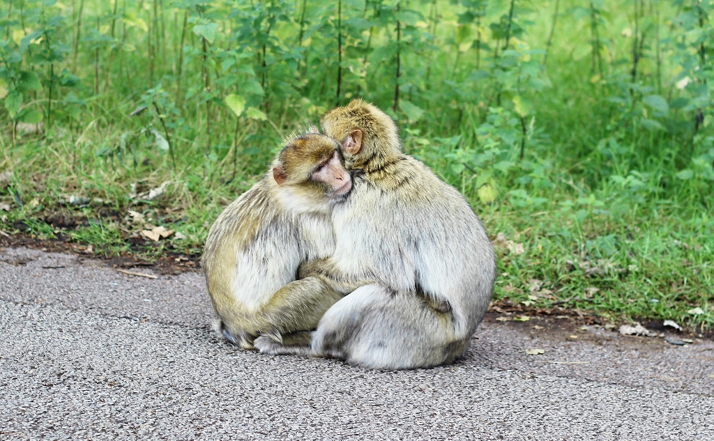 cuddling monkeys