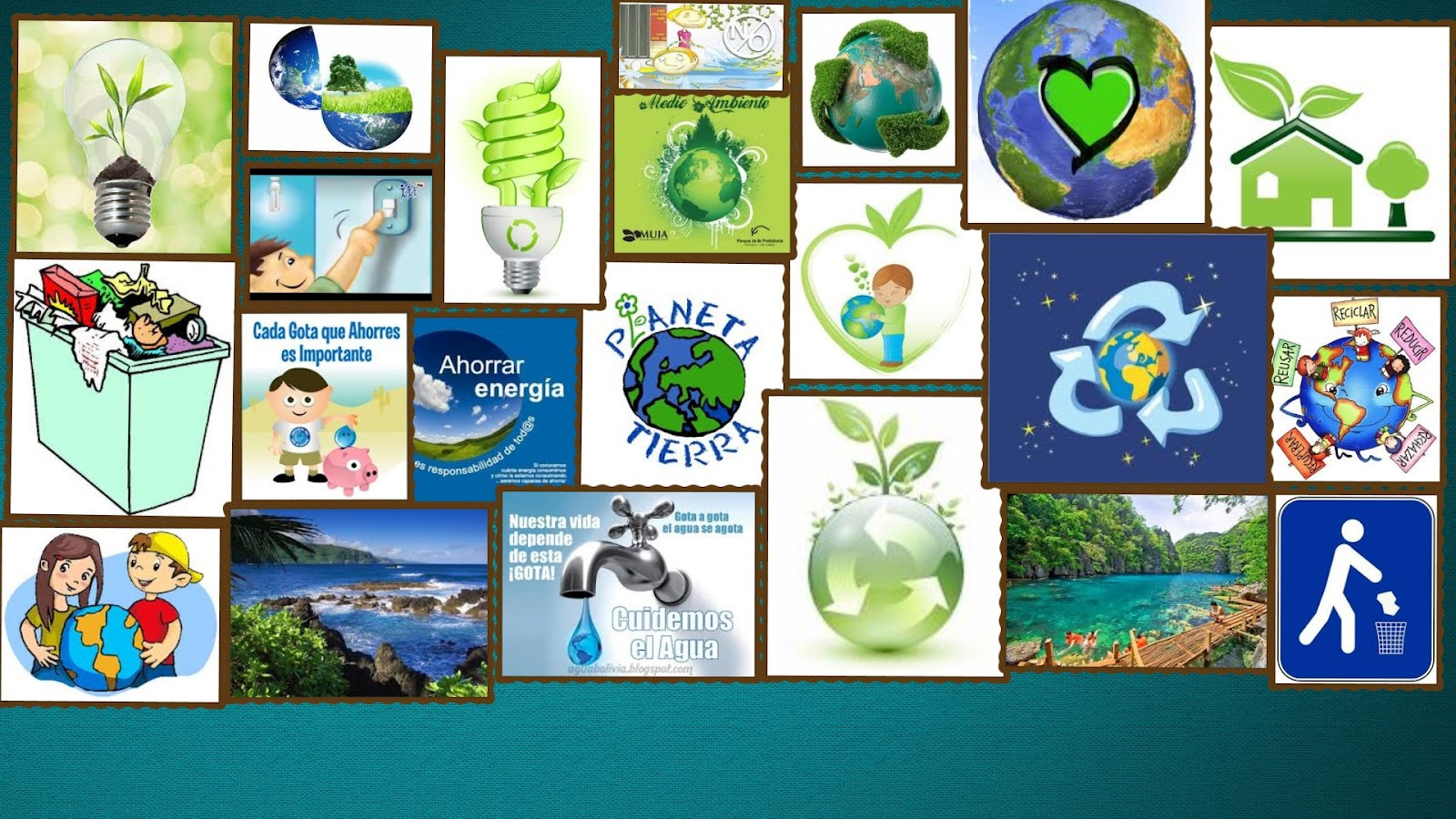 Collage De Medio Ambiente