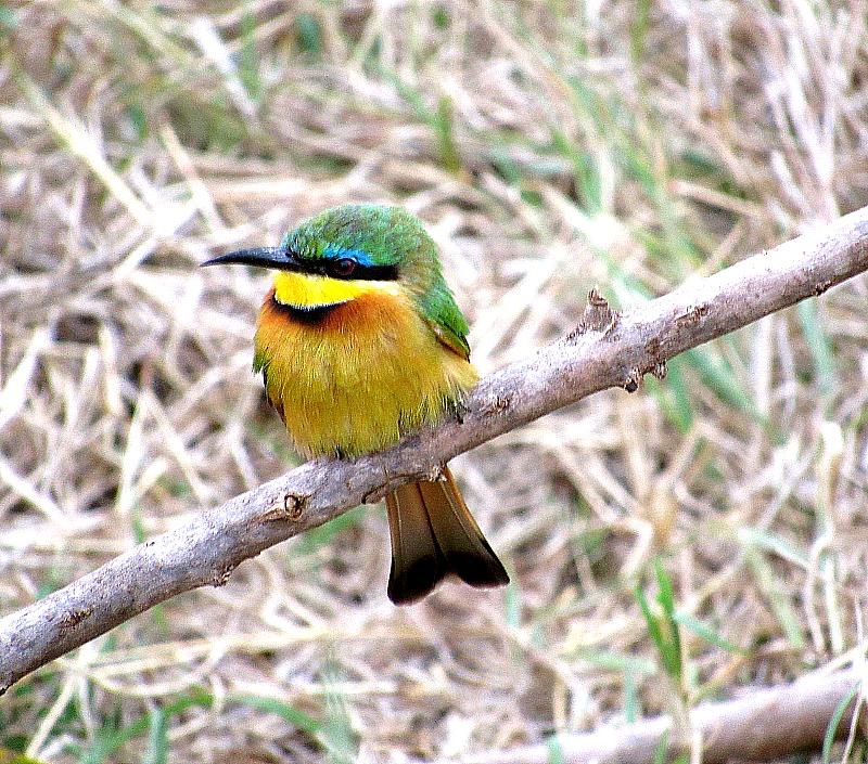 MASAAI MARA, KENYA - Birds