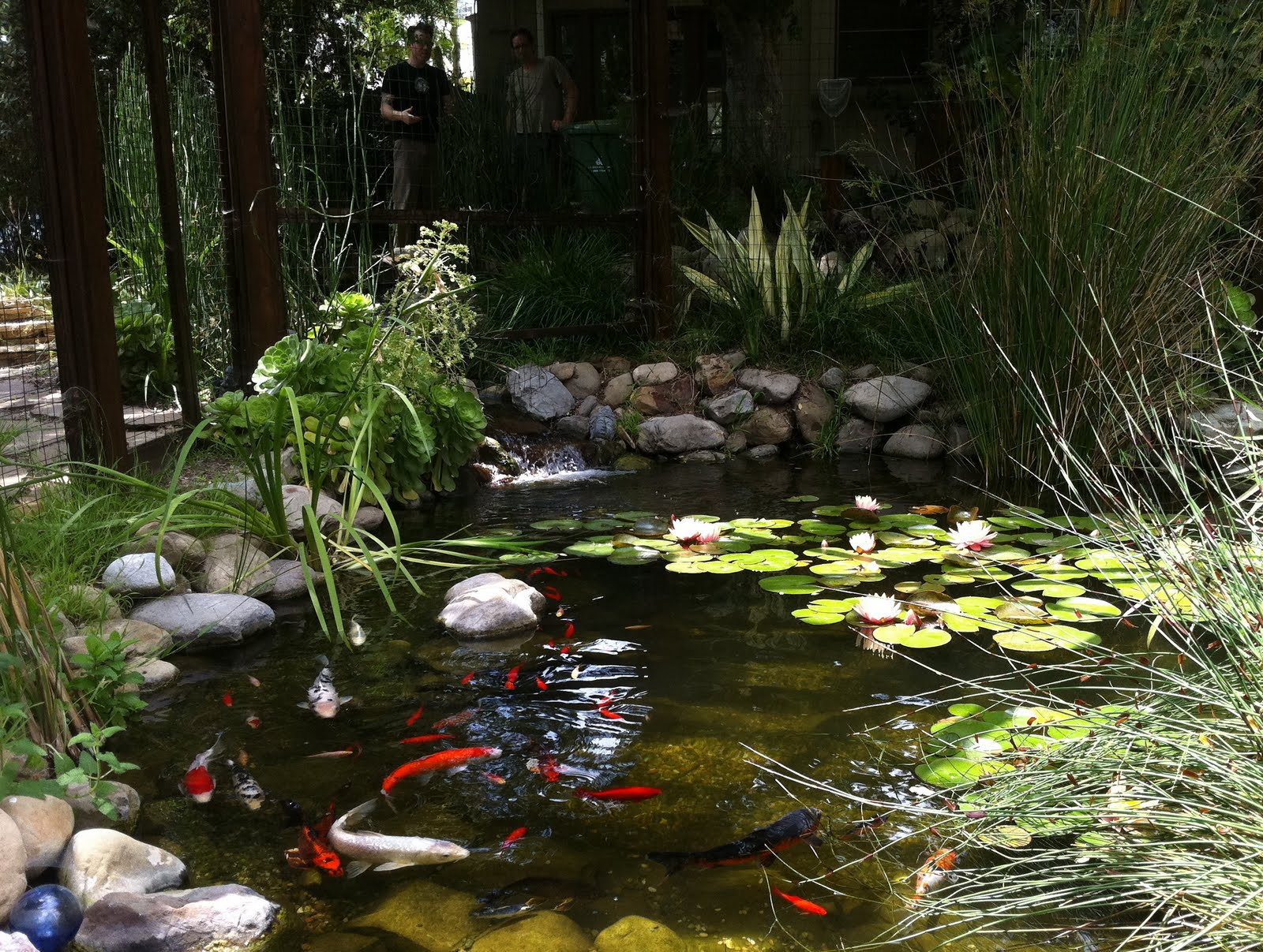 Elgin eco house garden serenity in the midst of the city for Patio koi pond