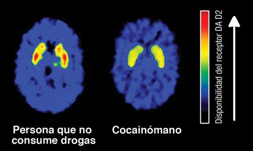 efecto cocaina sexo: