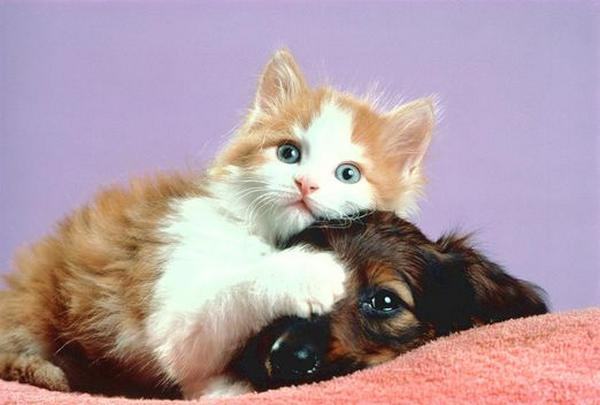 Funny Dogs & Cats Unconditional Love Seen On www.coolpicturegallery.us
