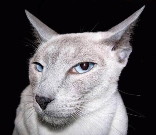 Fotos de humor gráfico con gatos
