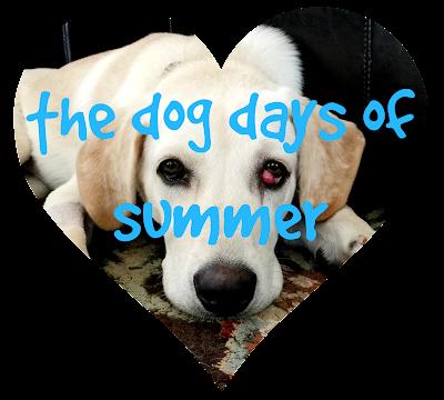 While I'm Waiting...the dog days of summer