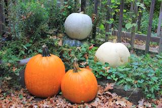 photo of four jack o'lanterns to be