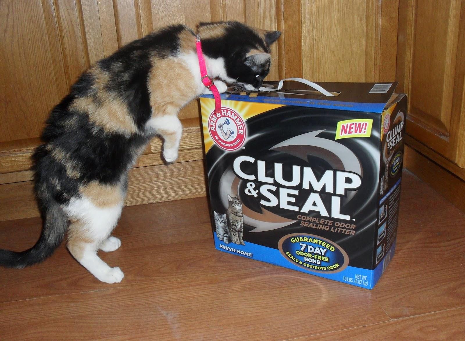 How Much Cat Litter Do U Need In Litter Box