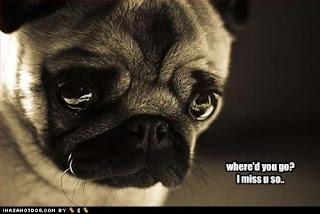Video Anjing Lucu terbaru 2012