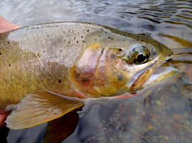 N. Fork Blackfoot Cutthroat