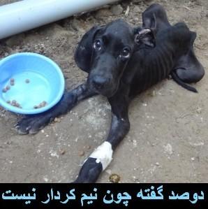 دوستداران حیوانات ایران رو عشقه!!!