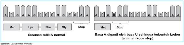 Perbedaan susunan mRNA normal dan mRNA yang mengalami nonsense mutation