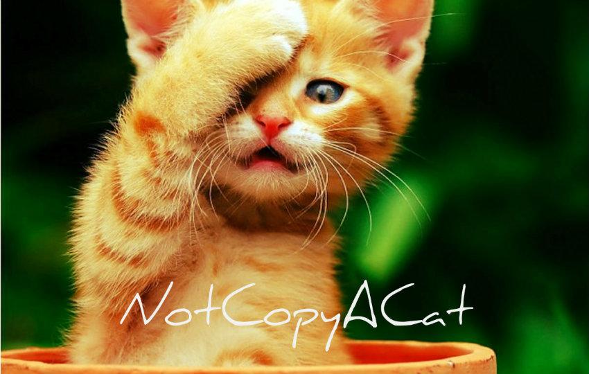 NotCopyACat