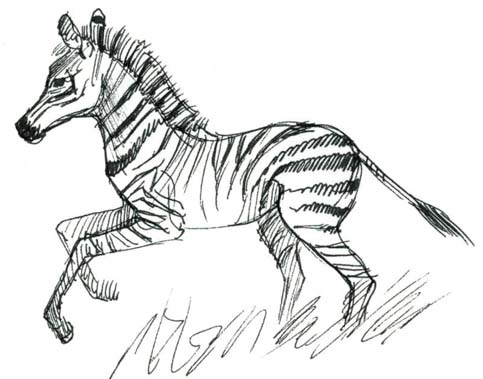 Easy Zebra Pencil Drawing