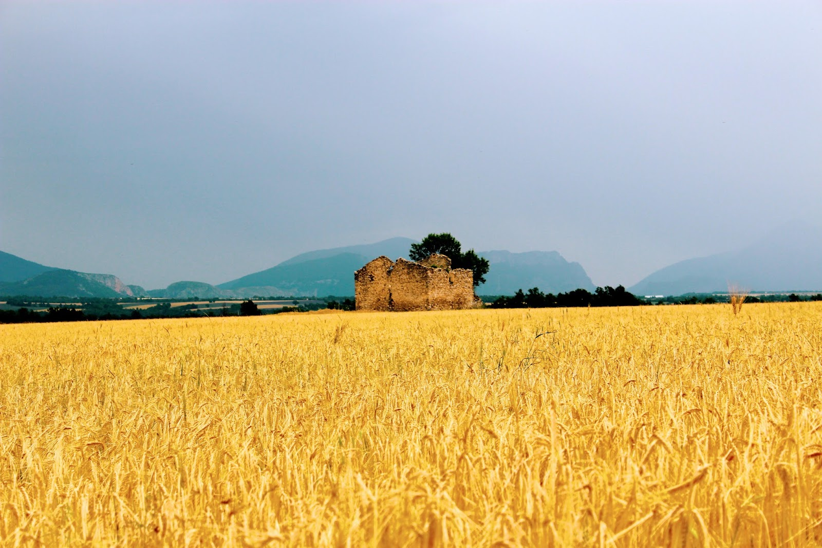 wheat field   barns/farms   Pinterest   Stables, Wheat fields and ...