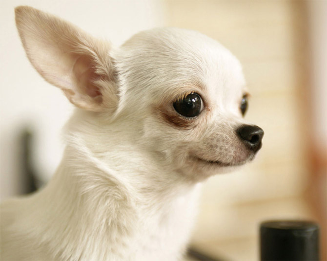 Cute animals top 20 cutest dog breeds amazing creatures