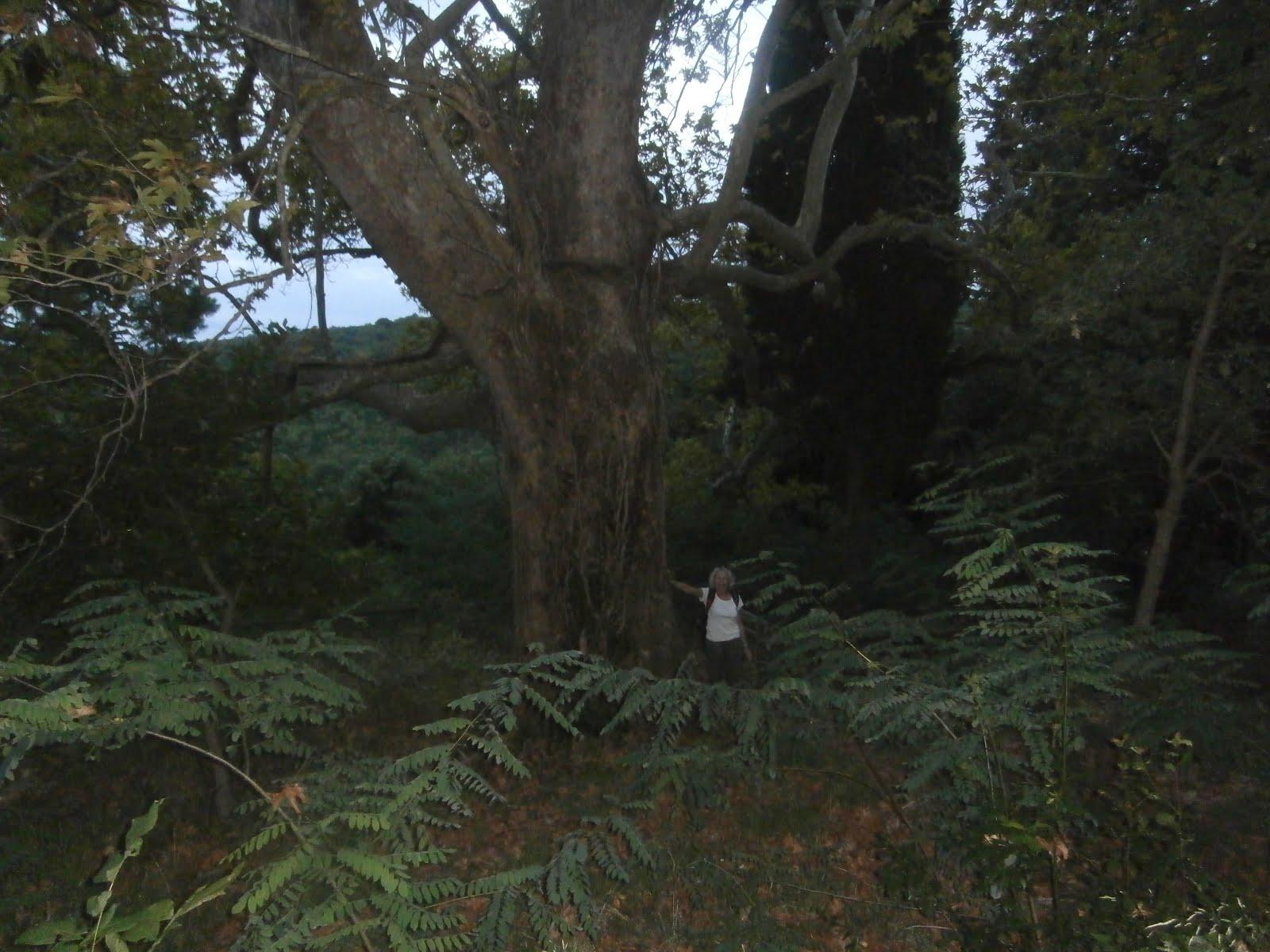 Δέντρο και άνθρωπος