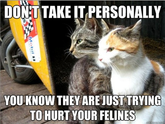 Best of funny restraining cat meme, cat pictures, cat meme, restraining cat meme, funny pictures
