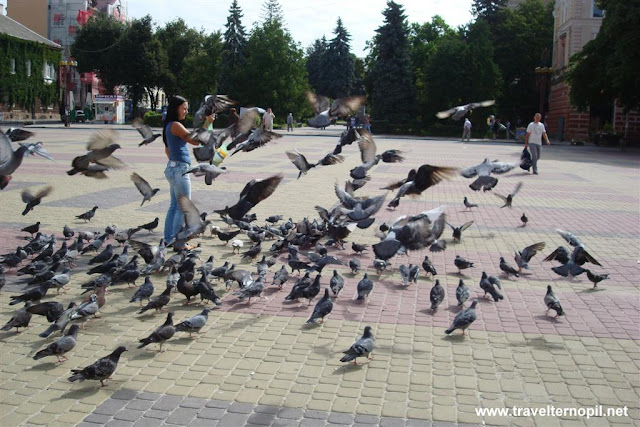 Feeding Pigeons in Ternopil, West Ukraine