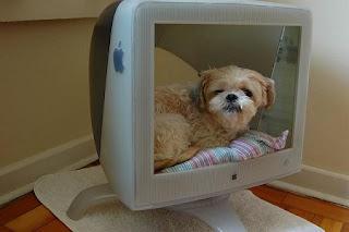 Cama Reciclada para Mascotas, Pantallas de Computadora