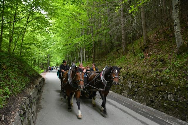 Schwangau horses