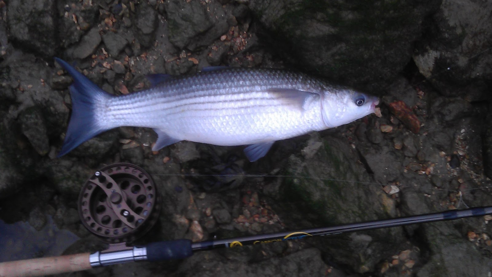 Diary of an average angler 3 7 12 last minute mullet for What time will the fish bite today