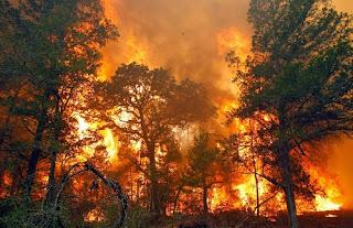 10 Kawasan Hutan di Indonesia yang Sering Mengalami Kebakaran