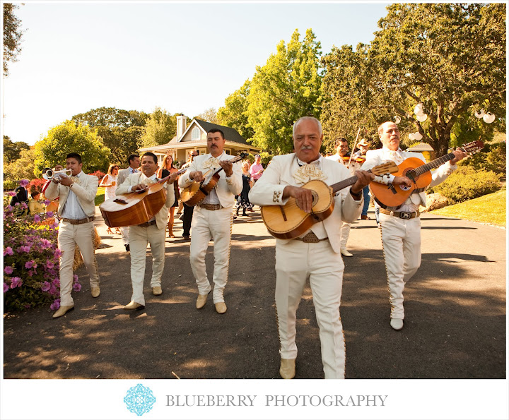 Sonoma mariachi band amazing outdoor wedding photography session