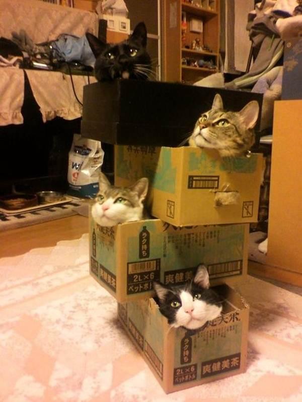 Сумасшедшие коты, фото 5