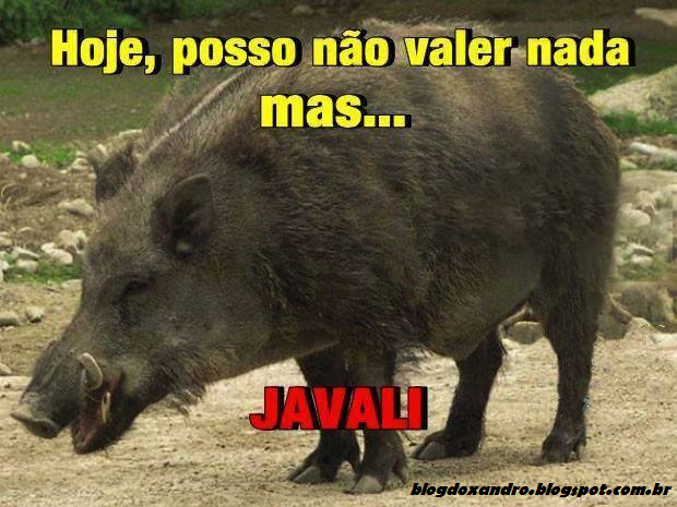 javali.png (620×465)