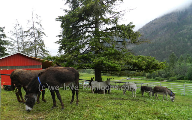 The donkeys stand under the trees during the rainfall