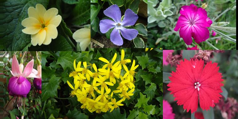 Vivero casona la colina nuestras plantas ornamentales for Que es un vivero de plantas ornamentales