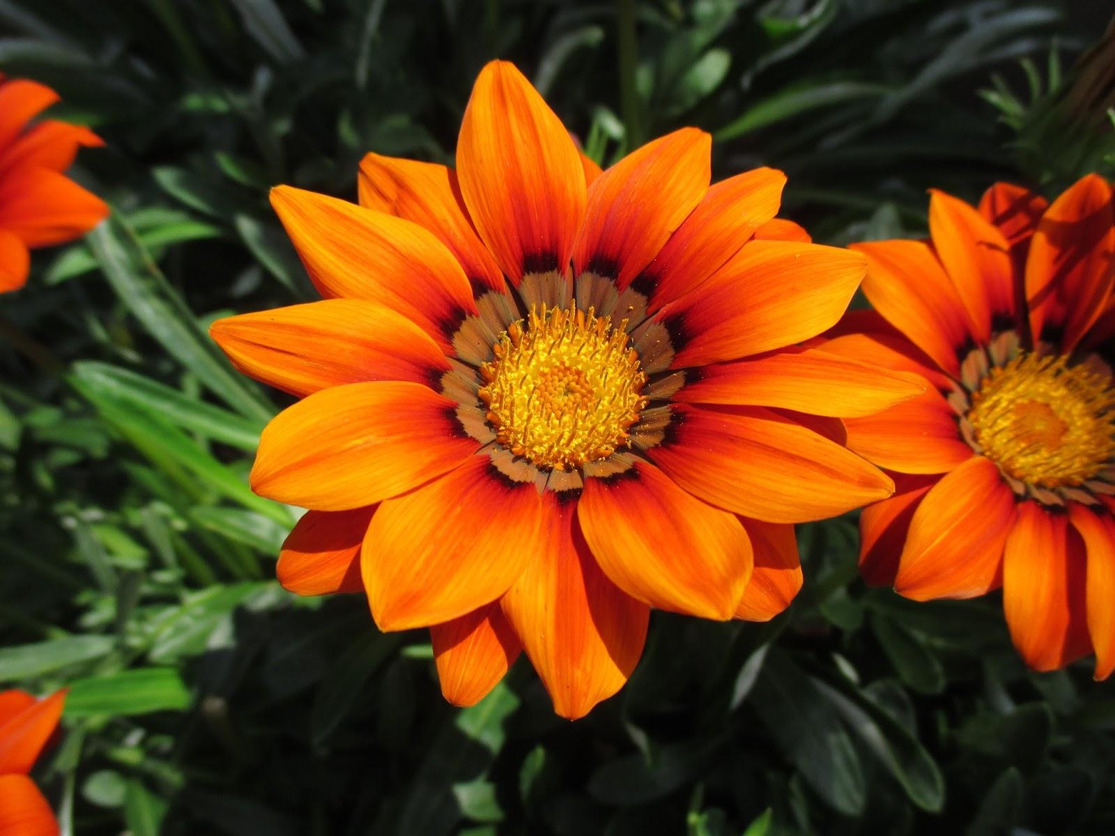 Dont Neglect Orange Rotary Botanical Gardens
