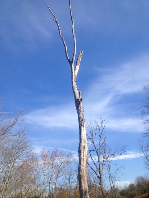 beautiful dead tree