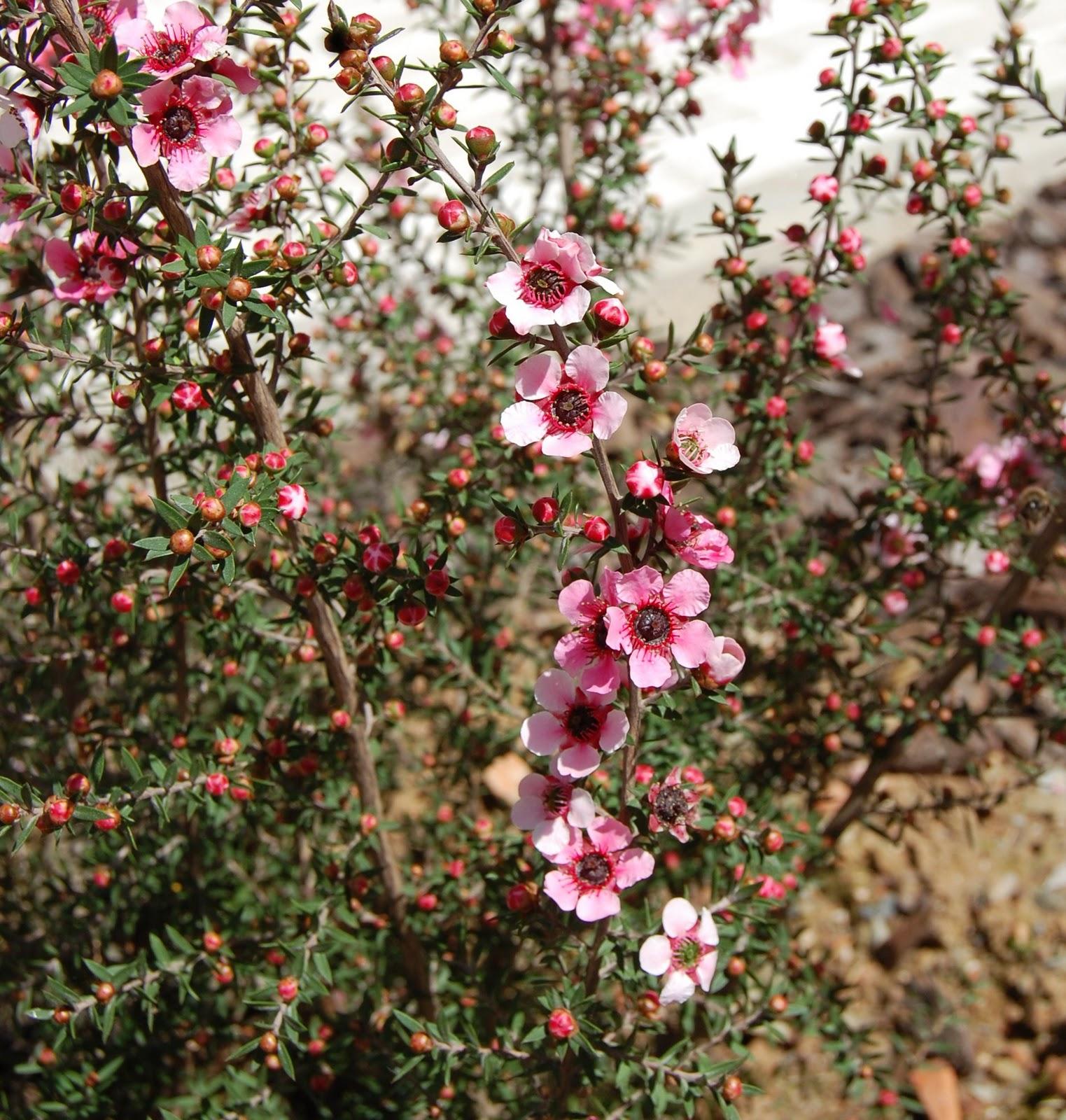 O meu mundo das plantas rica japonesa for 5 plantas decorativas