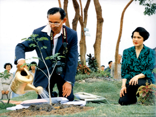 ผลการค้นหารูปภาพสำหรับ ภาพในหลวงปลูกต้นไม้