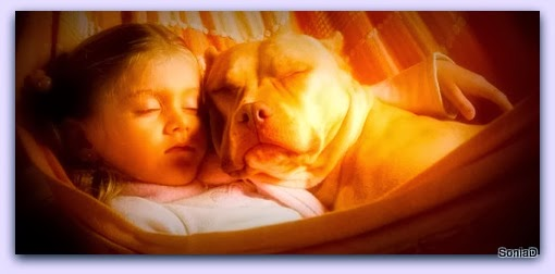 blog sul cane e i cuccioli