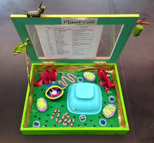 Designed by youth pollicita middle school animal and plant cell animal and plant cell models by mr lalatas 7th8th grade students ccuart Choice Image