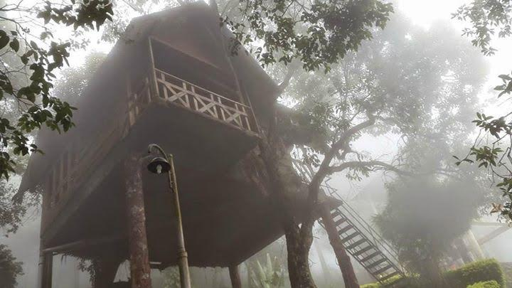 4 Nights 5 Days Munnar Tree House Alleppey Houseboat