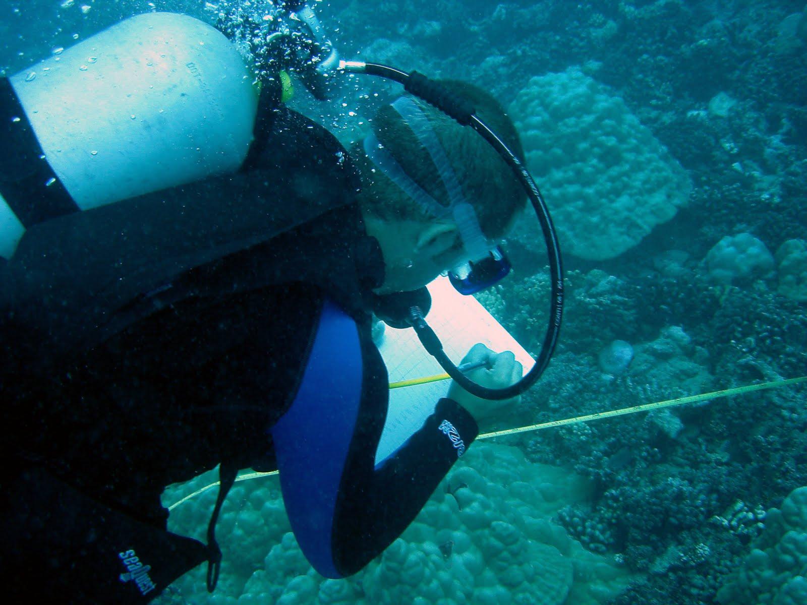 Marine Biology on Three Seas: Three Seas Marine Biology ...