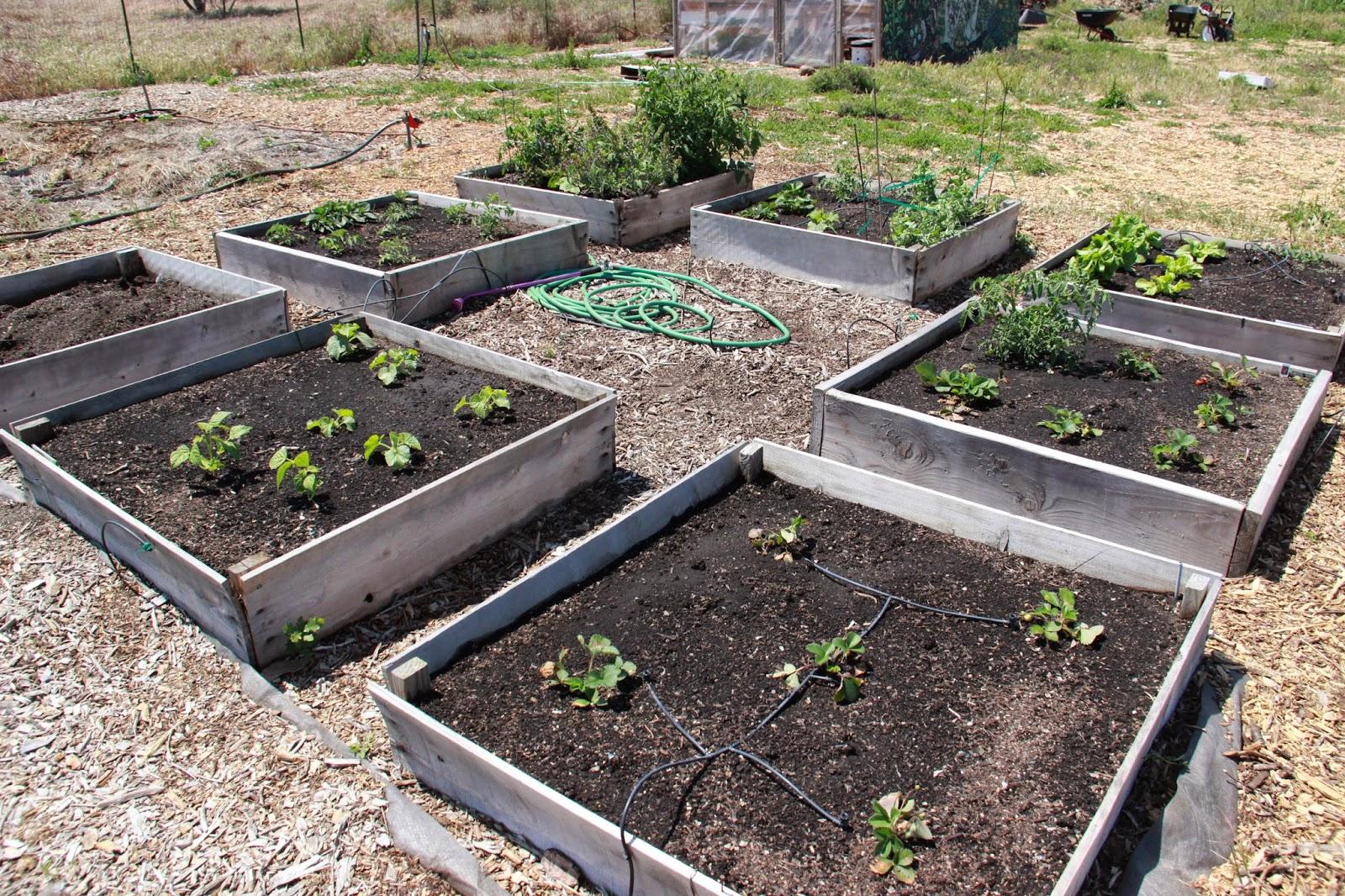 My First Garden Photos 7 different community garden plot