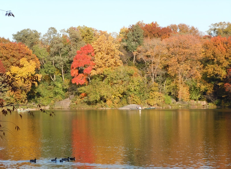 Autumnal Central Park lake trees