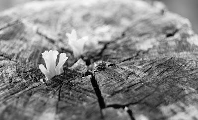 "<img src=""BlackWhite_Plants  (5).jpg"" alt=""mystique black white plants"">"