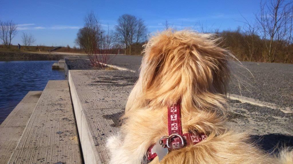 Entspannung Nichtstun Relaxen Hund draußen Frühling Dortmund Phönix-West