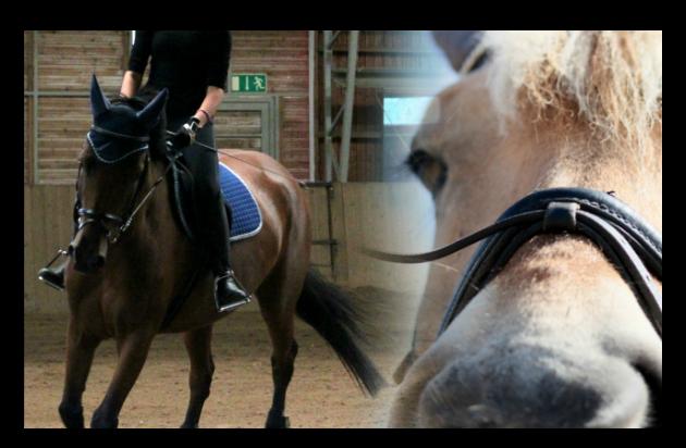 Muita hevosia