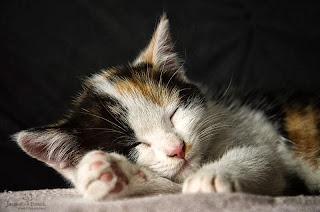眠たいにゃ~。