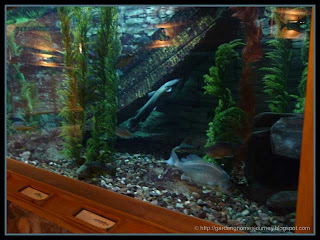 aquariums at Cabela's
