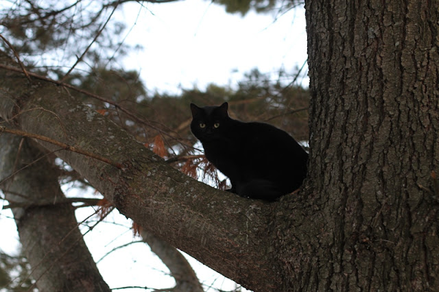 Zoey the amazing tree climbing cat