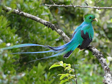 Quetzal wallpapers hd