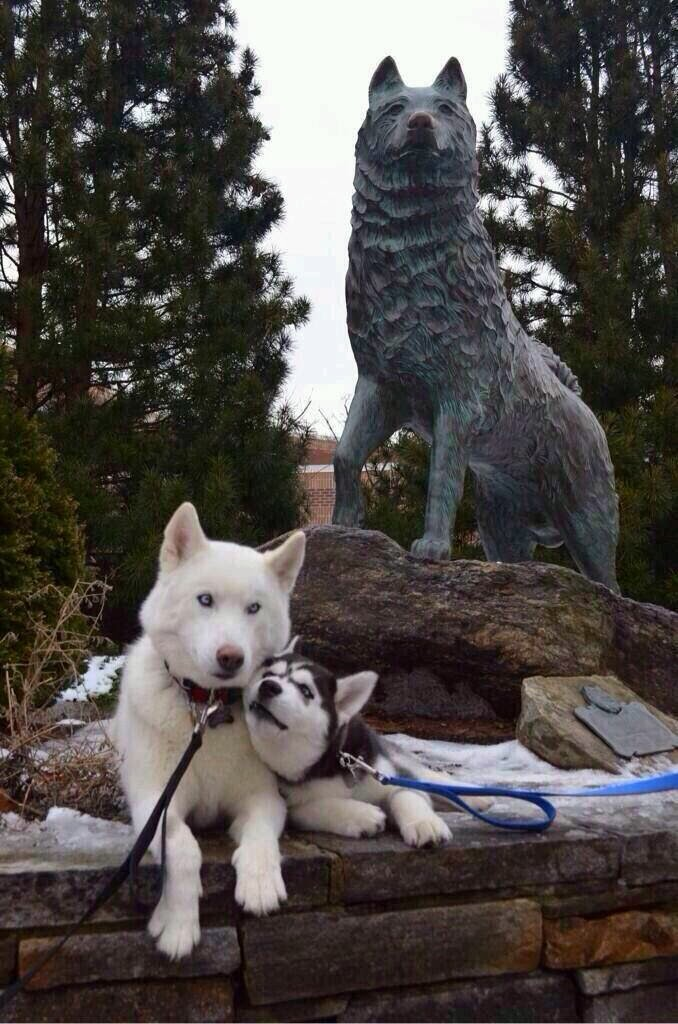 Cute dogs - part 9 (50 pics), two dogs in love sits in front of Balto statue